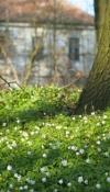 Park - wiosna